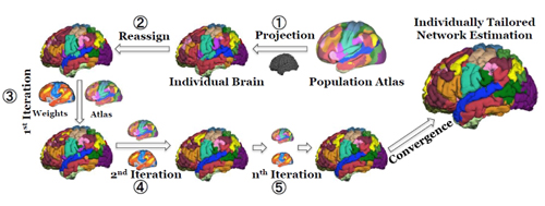 The iterative parcellation algorithm incorporates a functional atlas of the cerebral cortex generated from fMRI scans of 1000 volunteers